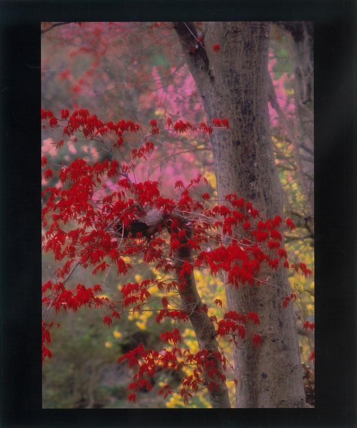 栗原 陽子(福島市)「春色(はるいろ)」  栗原 陽子(福島市) 「春色」     福島県花見山